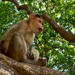 A monkey at Mollem National Park in Goa