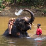 Tourists enjoying an elephant splash in Goa - Goa
