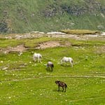 Rohtang pass in Himachal - Rohtan-Pass - Himachal-Pradesh