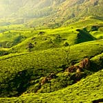 The beautiful tea plantations of Munnar in Kerala - Munnar - Kerala