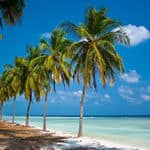 Palm trees and the deep blue sea at Lakshadweep - Lakshadweep