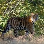 Bandhavgarh National park in Madhya Pradesh - Bandhavgarh - Madhya-Pradesh