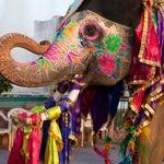Gangaur festival in Rajasthan - Jaipur-Jodhpur - Rajasthan