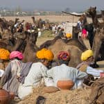 Camel Fair at Pushkar - Pushkar - Rajasthan