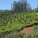 The beautiful hill station of Ooty - Ooty - TamilNadu