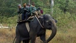 Jungle Safari at Kanha National Park