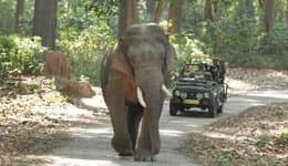 Wildlife safari at Bandhavgarh National Park