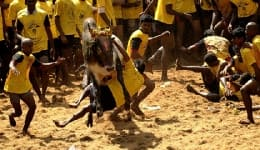 Photos of Alanganallur Jallikattu, the sport banned by Supreme Court of India