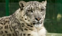 West Bengal's Darjeeling Zoo to receive Earth Heroes Award!