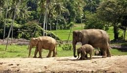 Rajamala Wildlife Sanctuary