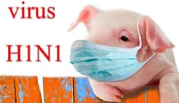 6 precautions for travellers to be safe from swine flu in India