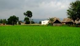 Yelagiri