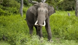 Wildlife sanctuaries in Karnataka