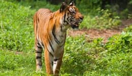 How to reach Sundarban National Park