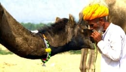 Everything you need to know about the 2015 Pushkar Camel Fair