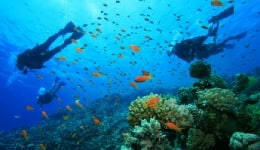 5 best places to go scuba diving in India