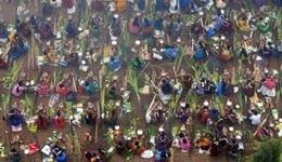 Pongal Festival in Chennai