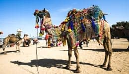 4 reasons why you should pack your bags and set forth to the Pushkar fair!