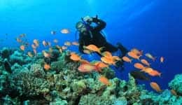 Things to do in Lakshadweep