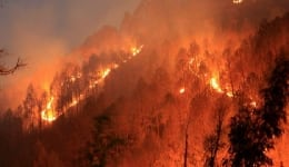 Uttarakhand fire: 10 things you need to know about the forest fire destroying our national parks