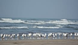 Best beaches in Maharashtra that are ideal for weekend getaways