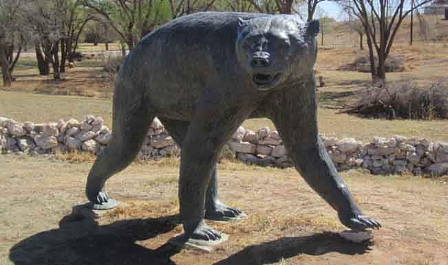 Short Faced Bear