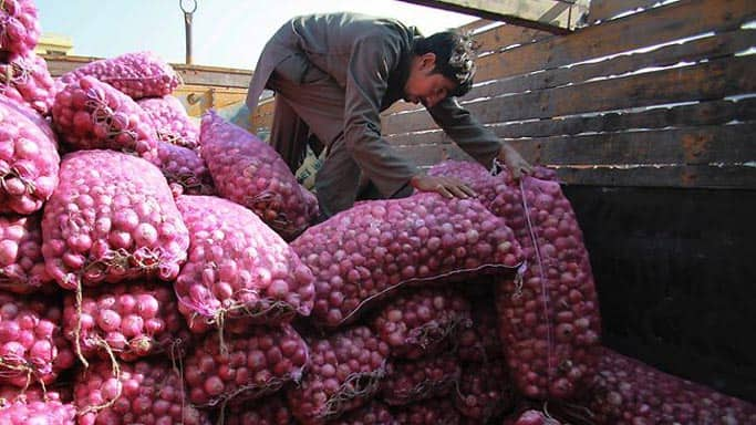 Government  hikes onion minimum export price to US Dollar 500 per tonne