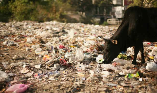 garbage dumpyard