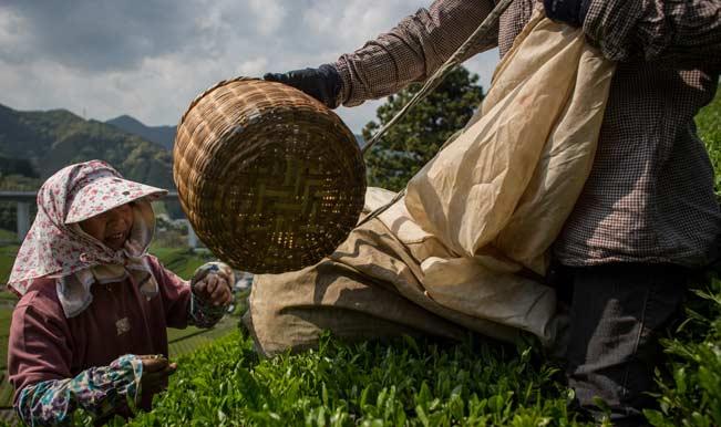 Pesticides in Indian tea, says Greenpeace India; Tea Board denies