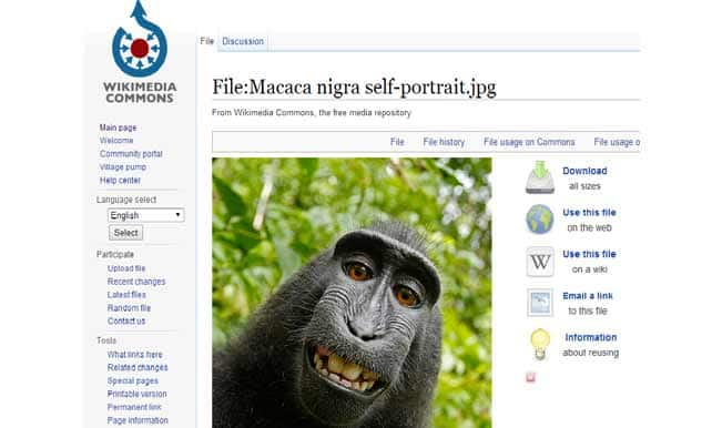 Monkey clicks selfie with photographer's smartphone: Fight between Wikipedia and photographer over copyright issues