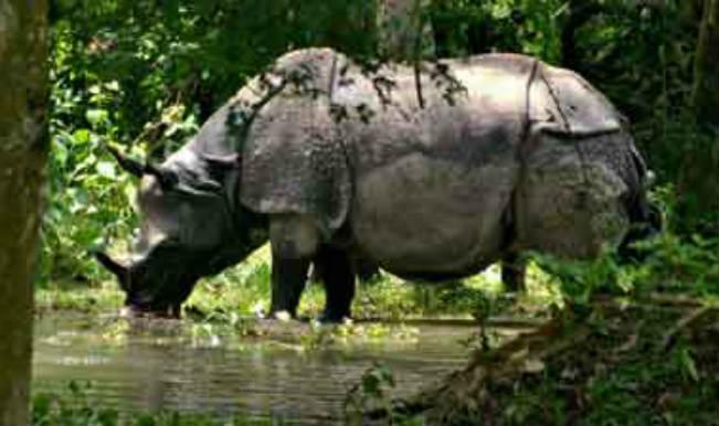 Poachers shot dead in Assam's Kaziranga park