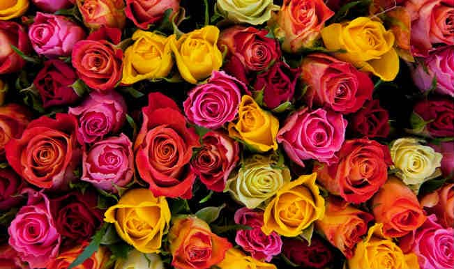 Happy Rose Day: Colombian flower exports blooming ahead of Valentine's Day