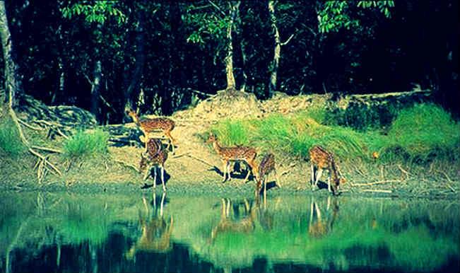 Environmental loss in Sundarbans worth Rs 1290 cr: World Bank