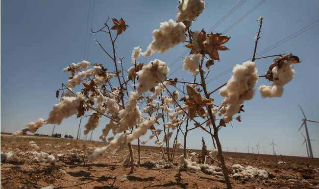 Farmers feel the heat as rain damages crops