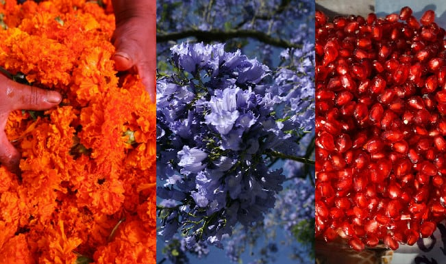 Happy Holi 2015: Top 9 organic colours you can make at home this Dhulandi