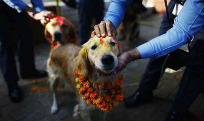 Move over Yulin dog meat festival. Nepal has a festival to thank dogs for being loyal friends
