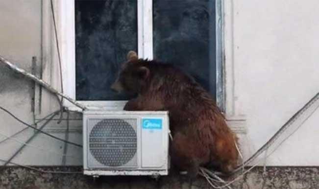Georgia Floods: 12 dead as lions, bears, hippopotamuses, escape captivity in Tbilisi