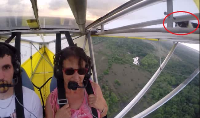 This cool cat took a ride on a plane wing! Does it return safely?