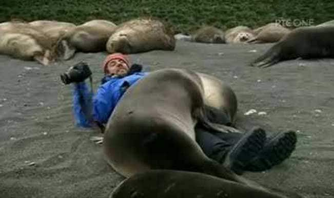 Aww! Seals cuddle up to photojournalist and want his camera, too! (Watch video)