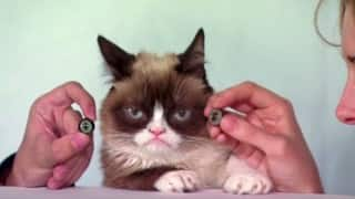 OMG! Grumpy Cat to get waxed at Madame Tussauds Museum and she's absolutely grumpy about it!
