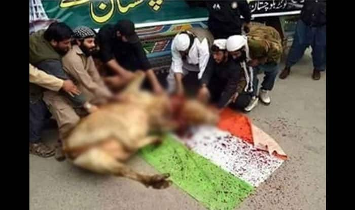 Pics of Cow being slaughtered on Indian National Flag in Jammu & Kashmir goes viral: Real or Fake?