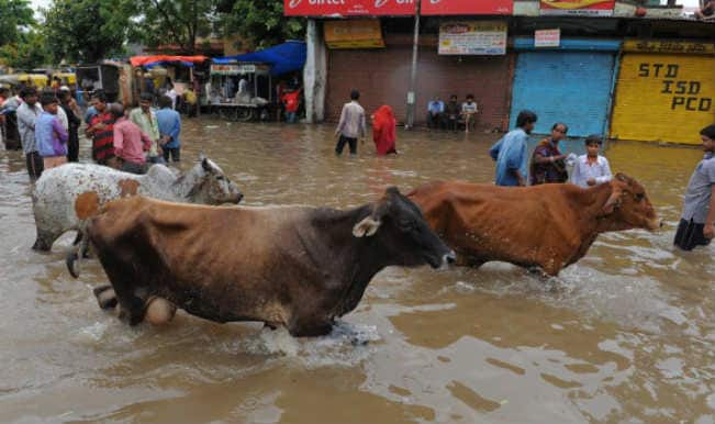 Flood like situation affects dairy industry in Gujarat; 1Lakh cattle die