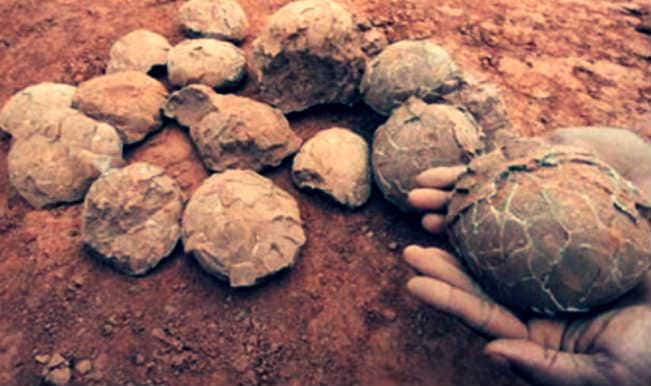 Dinosaur eggs and fossil seized from a residence in Heyuan City of China!