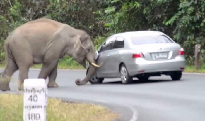 OMG! Crazy baby elephant tries to topple car, plays with it like a toy!