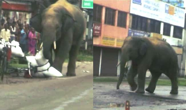 Elephant evacuated from West Bengal floods enters residential area