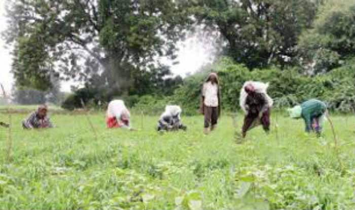 Government to raise funds to complete impending irrigation projects