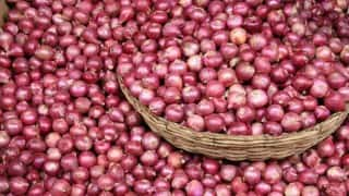 Onions for free! Madhya Pradesh govt gives away onions free of cost to save them from rotting away