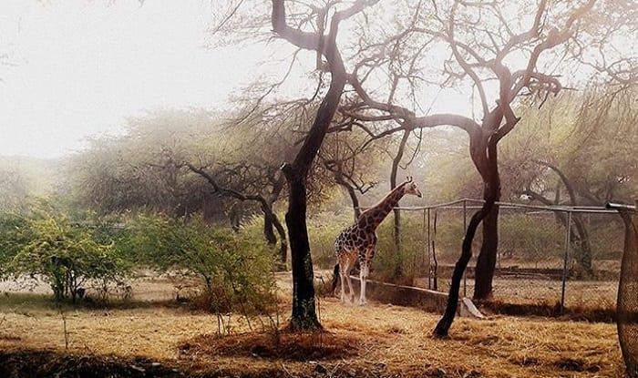 Outfit demands release of Delhi Zoo jumbos