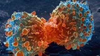 क्या है ल्युकेमिया? जानिए कैंसर के इस जानलेवा प्रकार को