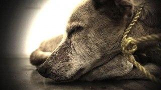 इस शख्स ने मांस में जहर मिलाकर 130 कुत्तों को मार डाला